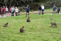 Trentham Monkey Park