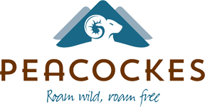 An image labelled Peacockes Hotel Logo